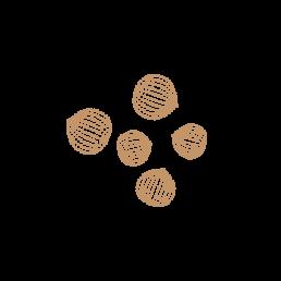 Nocciole del Piemonte i.g.p.